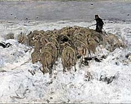 Flock of sheep with shepherd in the snow