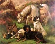 Scottish and Sealyham terrier