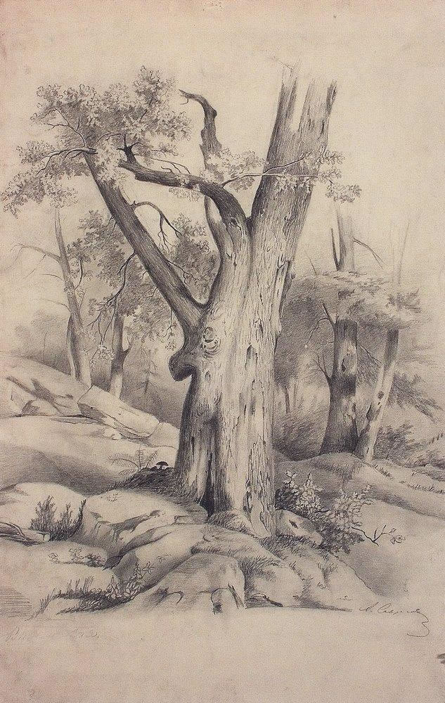 Алексей Саврасов. Дуб. 1850-е.
